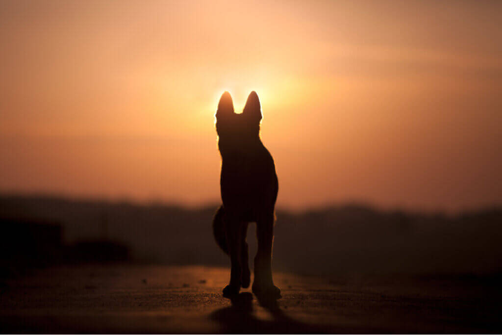 Können Hunde den Tod verstehen?