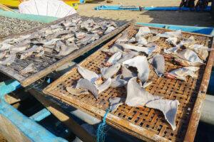 Haie - Haifischflossen