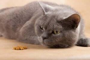 Pflege einer kranken Katze - appetitlose Katze