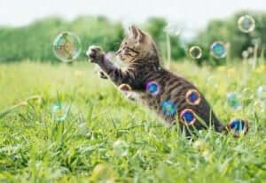 Katze zum Spielen animieren - Seifenblasen