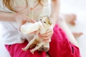 Kolostrum - Frau füttert Kätzchen