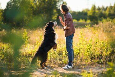 Ziele und Kommandos bei der Hundeerziehung