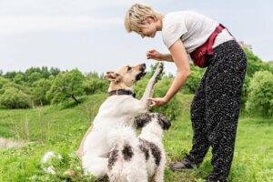 Hundeerziehung und Kommandos