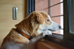 Psychische Erkrankungen bei Hunden: Trennungsangst