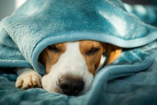 Psychische Erkrankungen bei Hunden: Wie kann man sie behandeln?