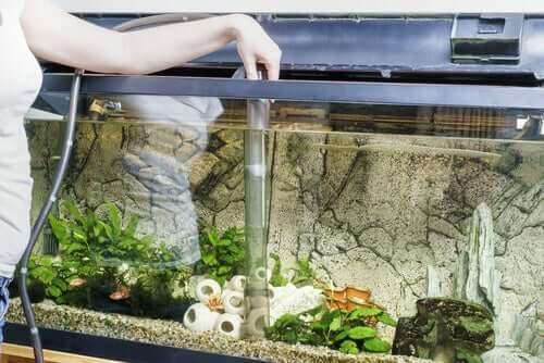 Aquarium reinigen