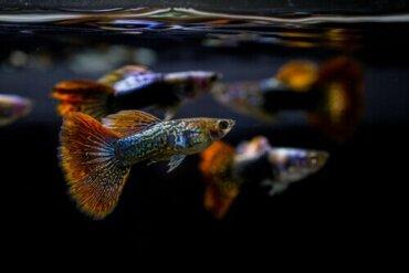 Der pH-Wert eines Aquariums und dessen Bedeutung