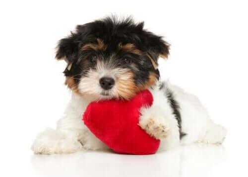 Die Herzgesundheit deines Hundes: 6 Tipps zur Pflege