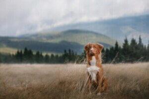 Camping mit Hund: Hinterlasse keine Spuren
