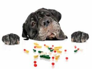 Manchmal sind Medikamente nötig, um die Herzgesundheit eines Hundes zu garantieren
