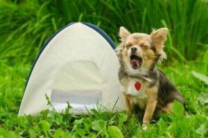 Nicht alle Campingplätze erlauben Haustiere