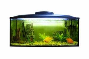 Dein Aquarium sollte ein ausgewogenes aquatisches Ökosystem sein