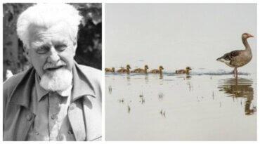 Konrad Lorenz und die Verhaltensmuster von Tieren