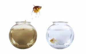 Wasserkreislauf im Aquarium: Wie funktioniert er?