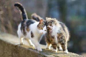 Hauskatzen haben es sehr schwer, wenn sie davonlaufen