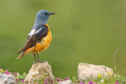 Der Guadarrama Nationalpark und seine Fauna