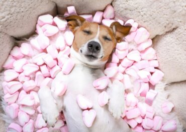 Sind Süßigkeiten für deinen Hund gefährlich?