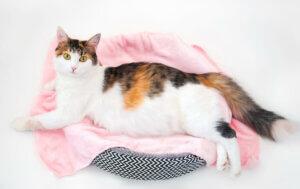 Notfälle nach der Geburt - Katze im Katzenbett
