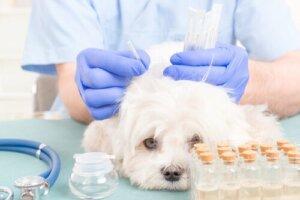 Akupunktur für Hunde: Wie funktioniert sie?