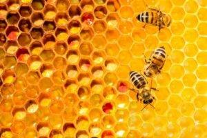 Bienen sind ein gutes Beispiel dafür, dass die Arbeit in Einheit kraftvoll ist
