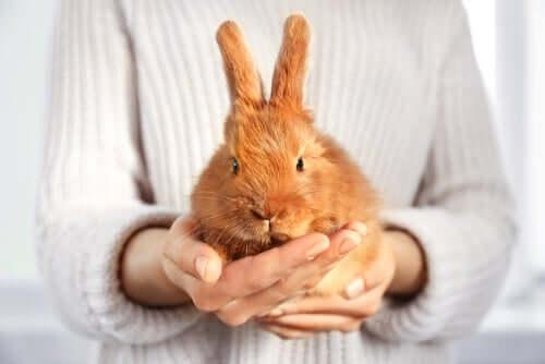 Der Schutz von Haustieren