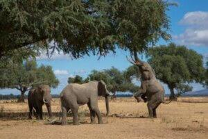 Da Elefanten gerne auf ihren Hinterbeinen stehen, muss dies ebenfalls beürcksichtig werden