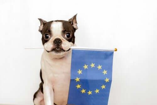 Europäisches Übereinkommen zum Schutz von Haustieren