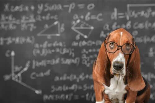 Ist es möglich, die Intelligenz von Hunden zu fördern?