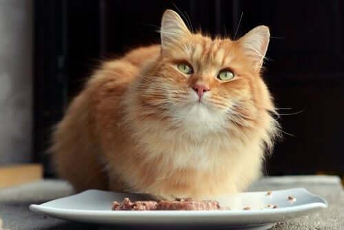 Nassfutter für Katzen und seine Vorteile