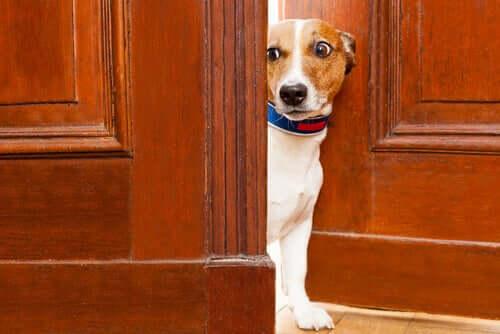 Können Tiere Angst durch Geruch wahrnehmen?