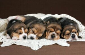 Das Klonen von Tieren macht es möglich, besten Eigenschaften der einzelnen Tierart weiterzugeben