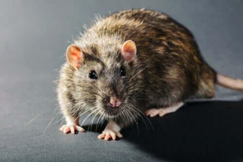 Viren verändern das Verhalten von Tieren