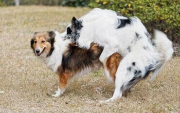 Verhaltensänderungen nach der Kastration deines Hundes