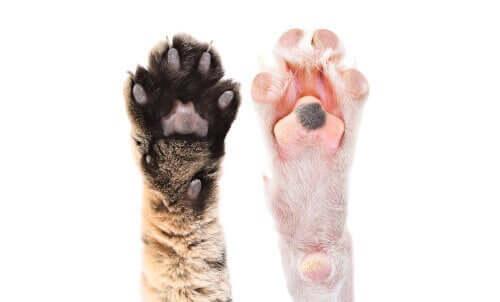 Pfotenballen bei Tieren: Interessante Fakten