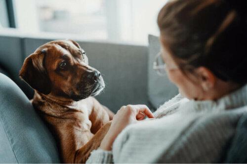 Erkrankungen, die Atembeschwerden bei Hunden verursachen