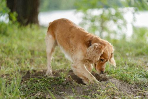Weißt du, warum Hunde ihr Futter vergraben?