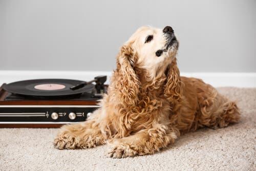 Musik und ihre Auswirkungen auf verschiedene Tiere