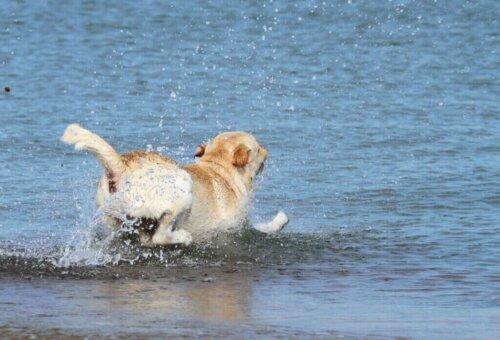 Rettungsteam rettet einen Hund aus dem Meer - Vorsichtsmaßnahmen am Strand