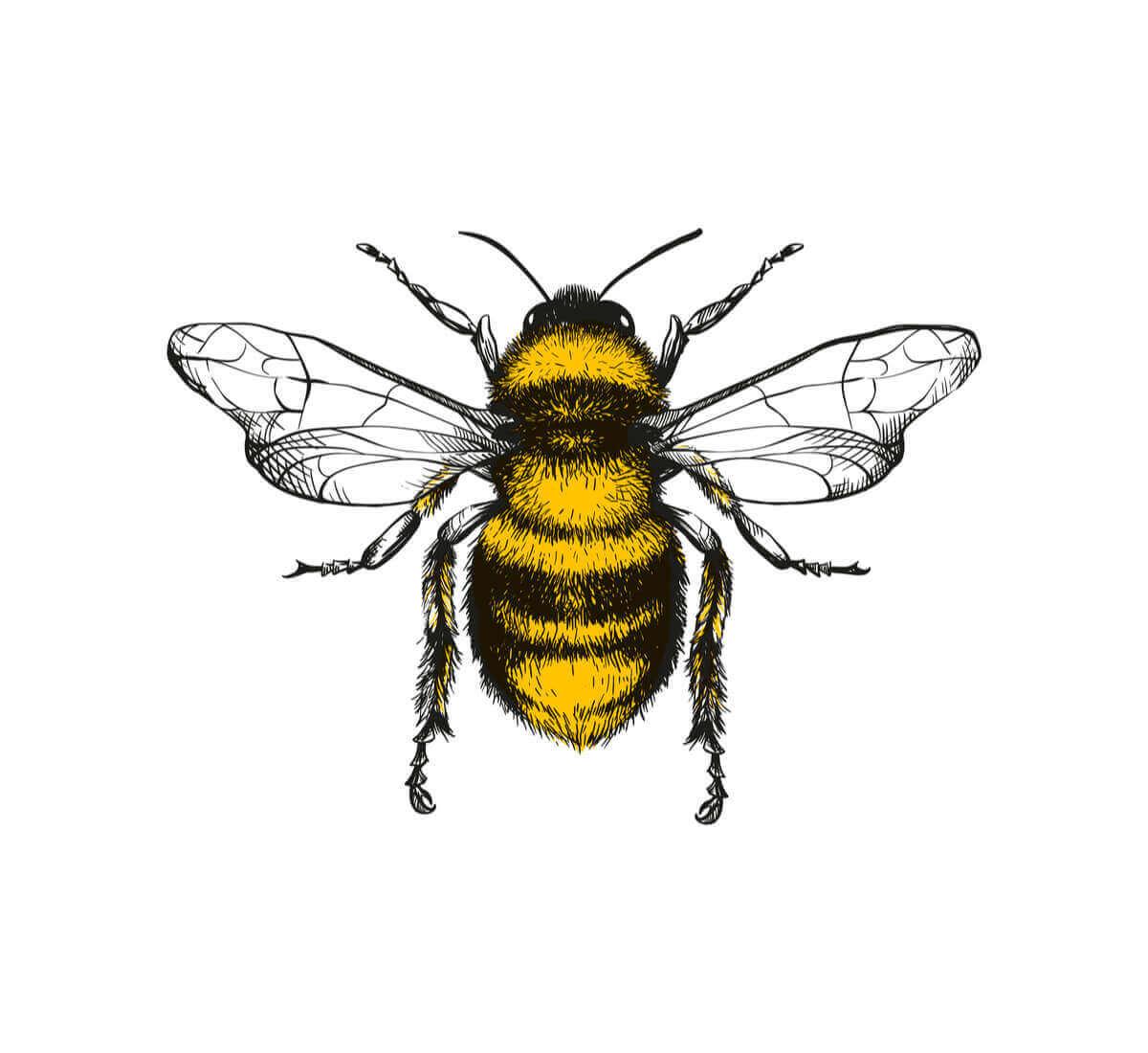 Schwänzeltanz - Zeichnung einer Biene