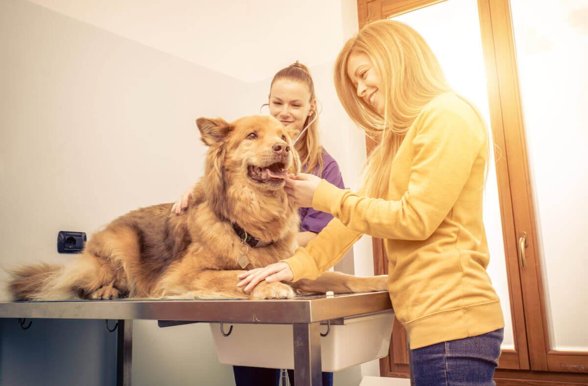 Atembeschwerden bei Hunden - Hund beim Tierarzt
