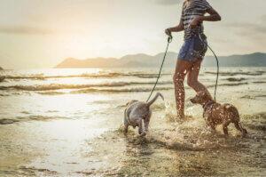 Vorsichtsmaßnahmen am Strand