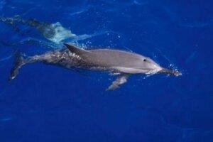 Delfine schlafen mit offenen Augen