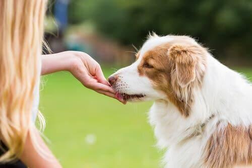 Hunde belohnen: Die Bedeutung von Leckereien und Liebkosungen nach dem Spaziergang