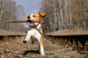 Hunden sollten nach körperlicher Aktivität belohnt werden