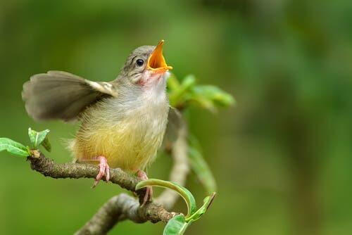 Vogelstimmen: Wie du Vögel an ihrem Gesang erkennst