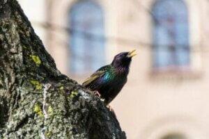 Vogelgesang: Die Stimme eines Vogels
