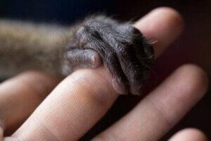 """Junge gerettete Wildtiere nehmen ihre Bezugsperson oft als """"Mutter"""" an"""