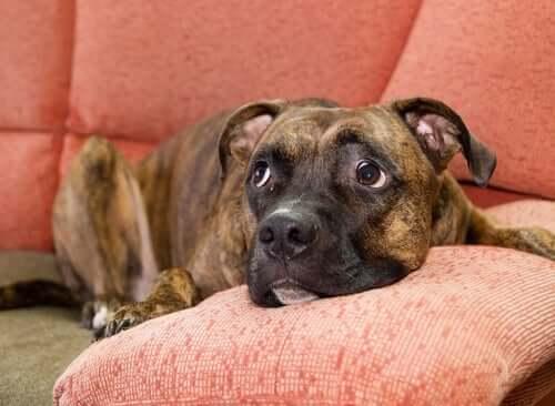 Hund mit Angst vor anderen Hunden: Was kann man tun?