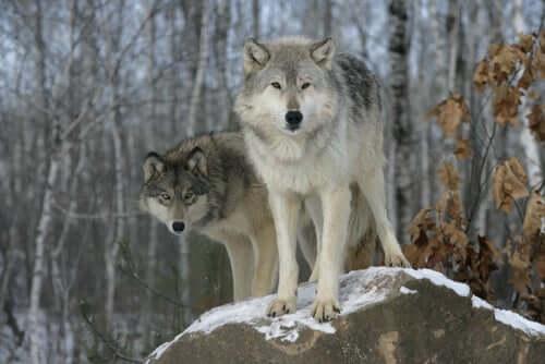 Natürliche Selektion im Tierreich
