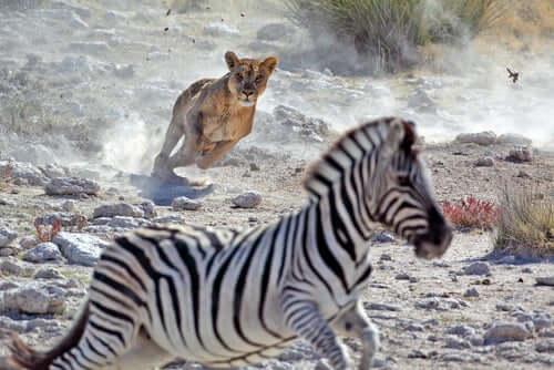 Natürliche Selektion und Anpassung im Tierreich
